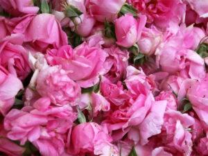 SoZoLe Rose - O nas
